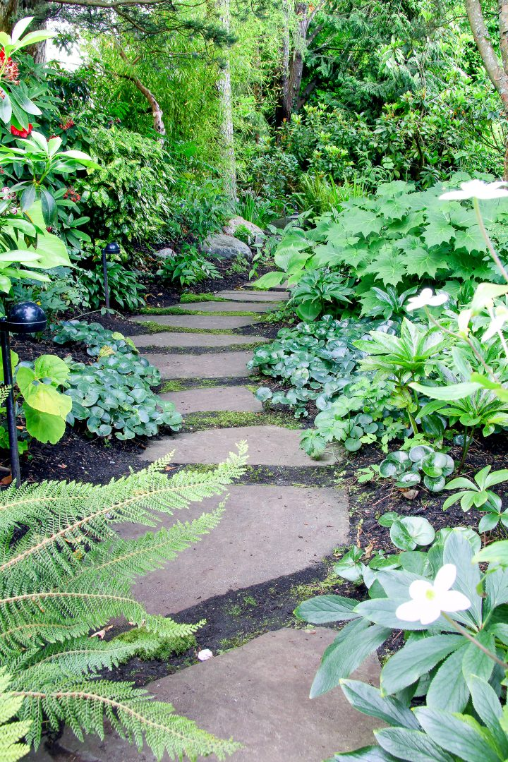Backyard woodland garden path surrounded with ferns and ground cover perennials ©Barbara Helgason - stock.adobe.com