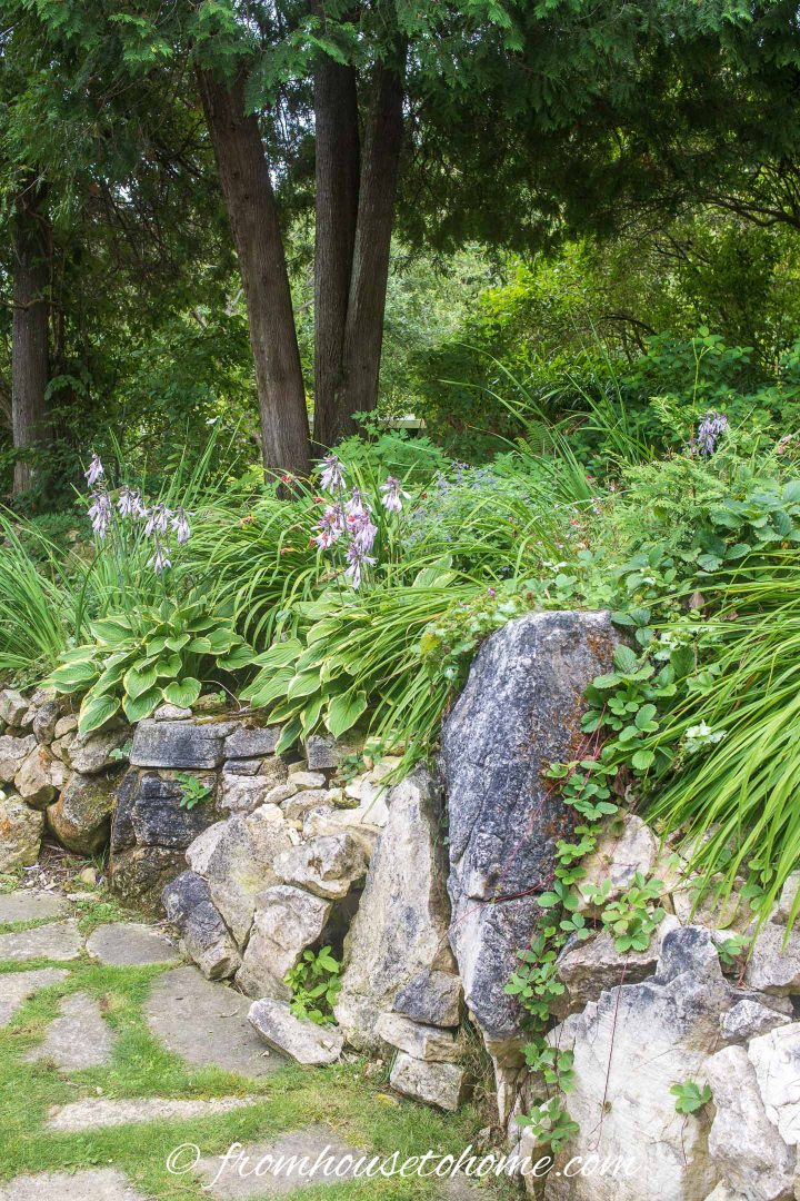 Hostas in a shade garden design with large rocks used as a retaining wall