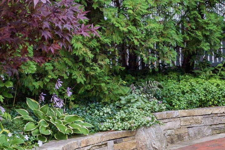 Shady garden border with Hostas, Periwinkle, Lamium, Ferns and Pachysandra