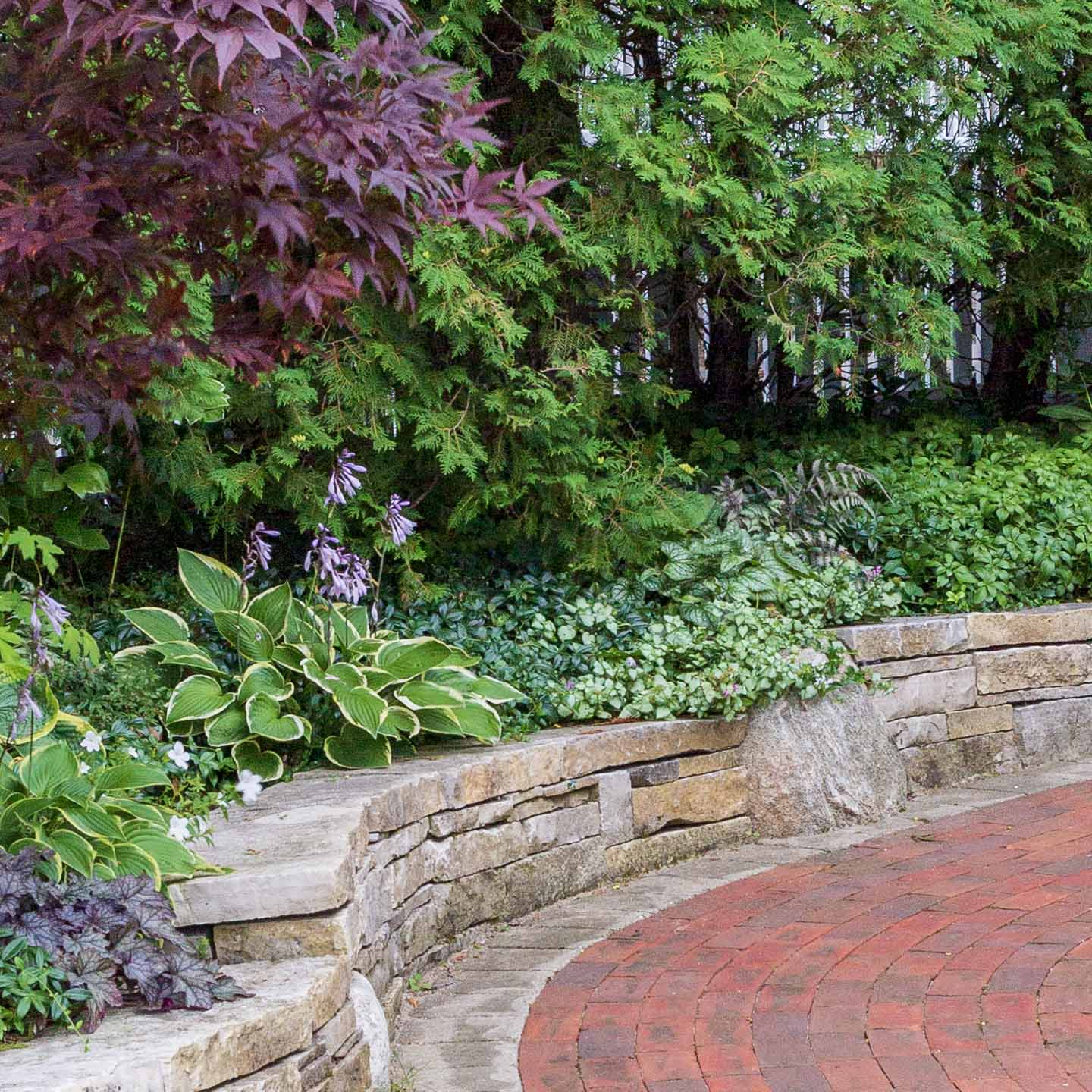 Perennial Ground Cover 21 Low Growing Plants That Thrive In The Shade Gardening From House To Home
