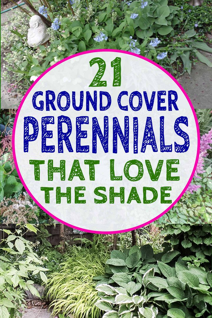 Perennial Ground Cover Plants