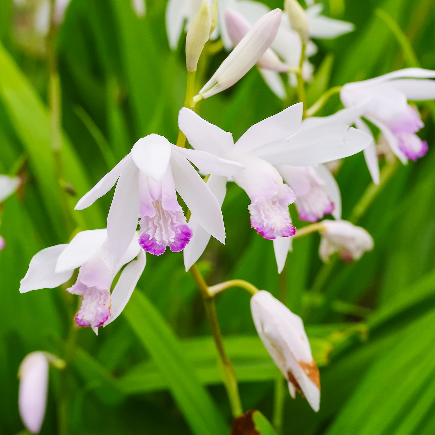 Tall Shade Perennials 10 Flowering Plants That Bloom In The Shade Gardening From House To Home