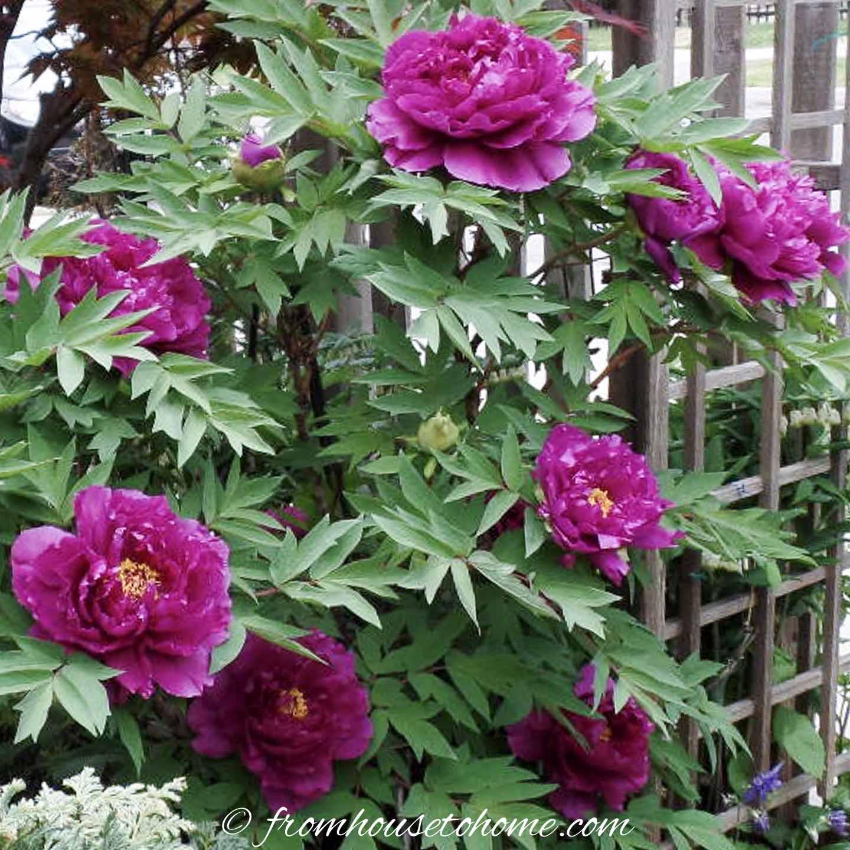 Shade Loving Shrubs 15 Beautiful Bushes To Plant Under Trees