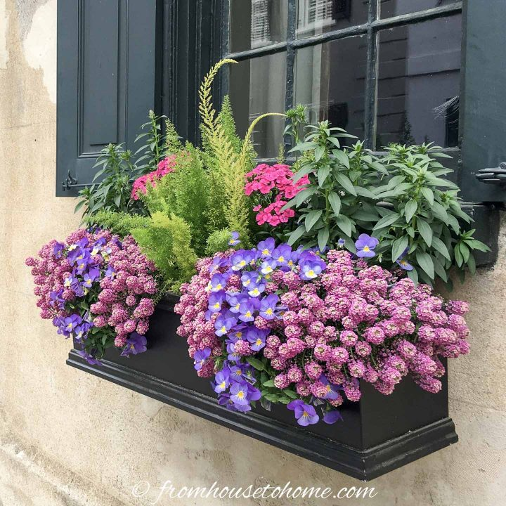 Verbena, Snap dragons, foxtail fern, pansies and phlox in a window box in the sun