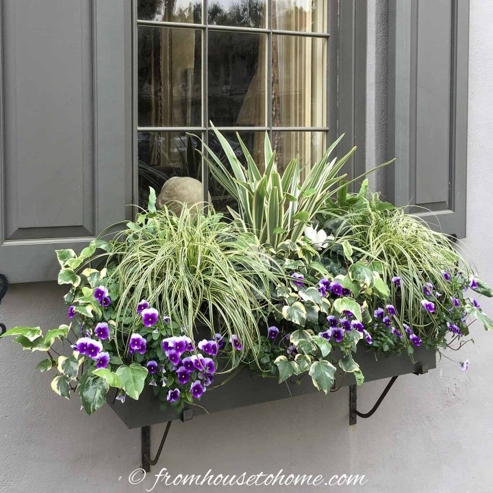 Plants with variegated leaves in a window box for shade