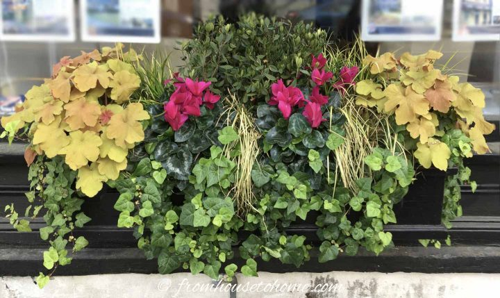 Heuchera, boxwood, sedge grass, ivy and Cyclamen in a perennial window box
