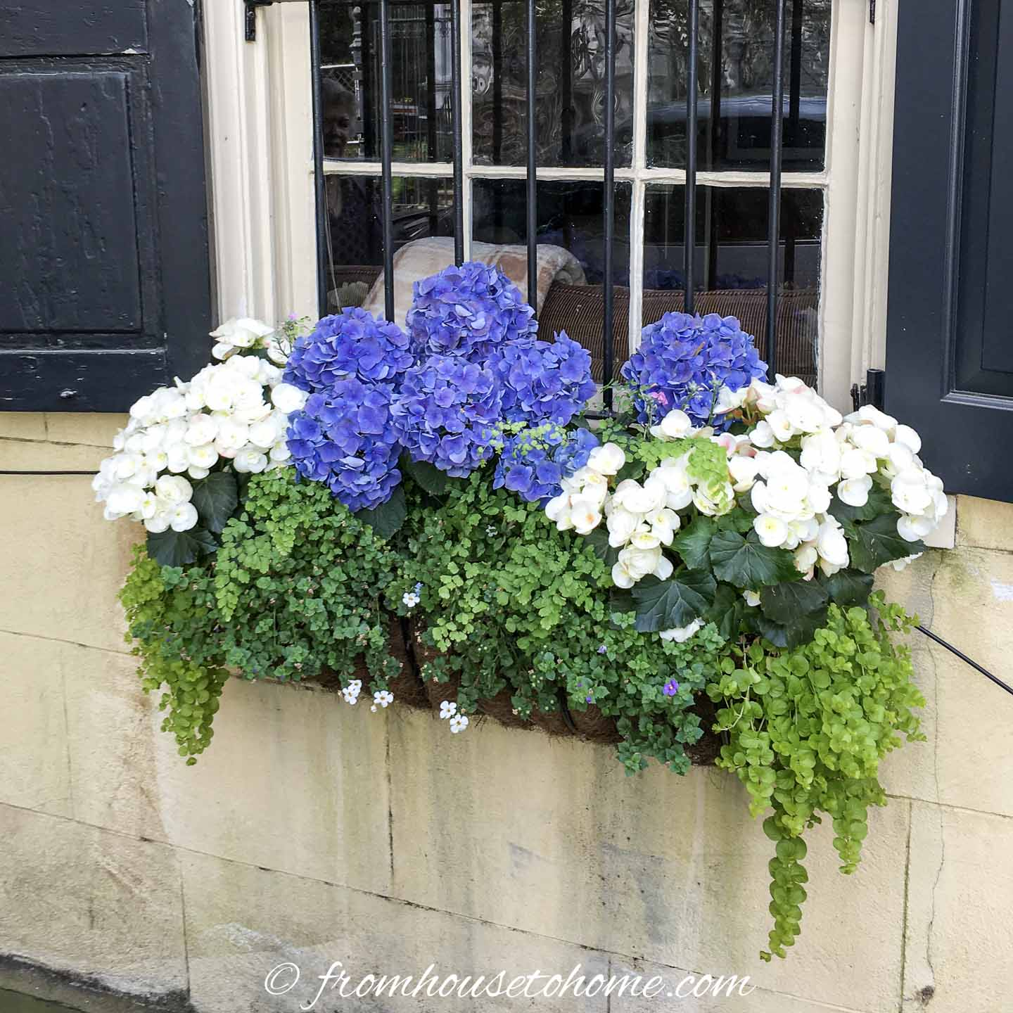 Window Box Flower Combinations Flower Box Ideas Inspired By Charleston Window Boxes Gardening From House To Home