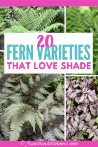 20 winter hardy fern varieties that love shade