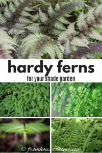 hardy ferns for your shade garden