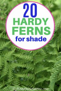 20 hardy ferns for shade