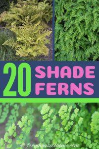20 shade ferns