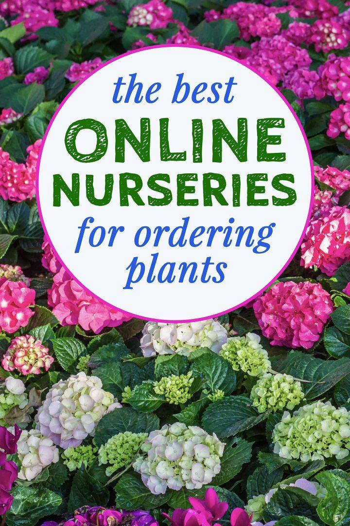 the best online nurseries for ordering plants