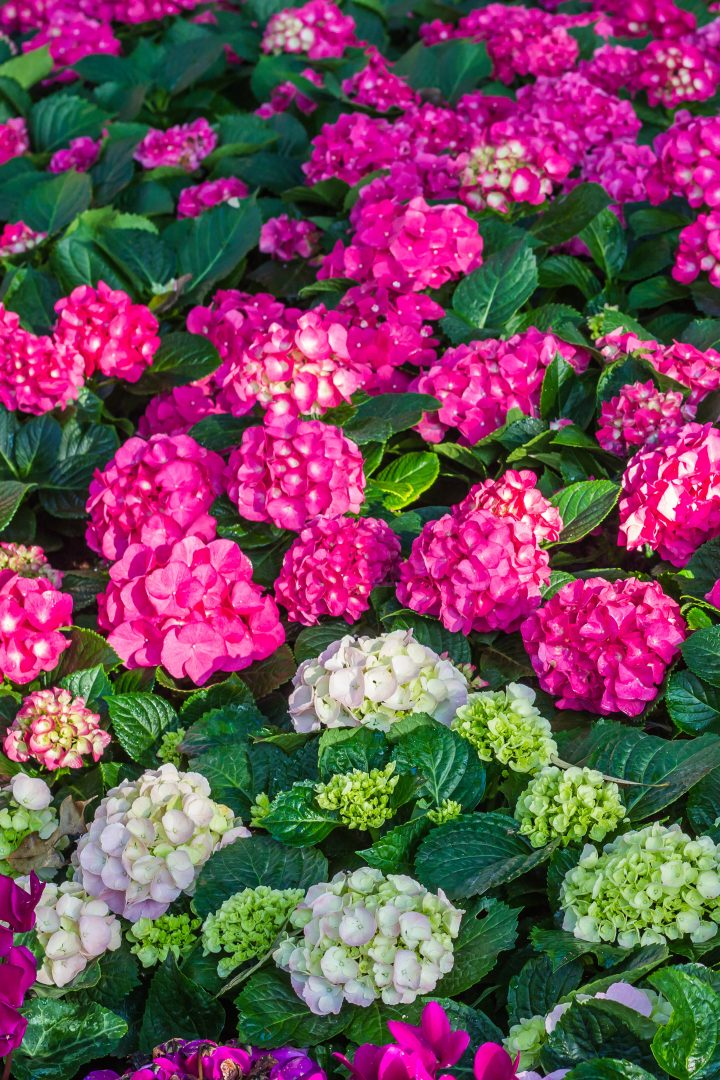 The Best Places To Buy Perennials Trees And Shrubs Online