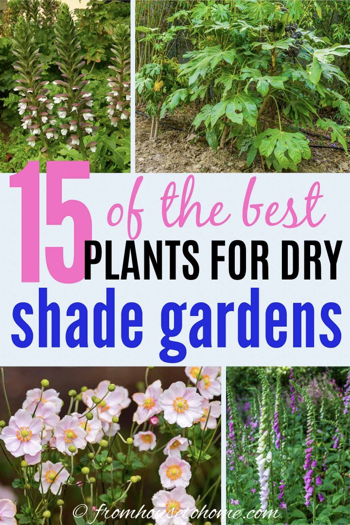 15 of the best plants for dry shade gardens