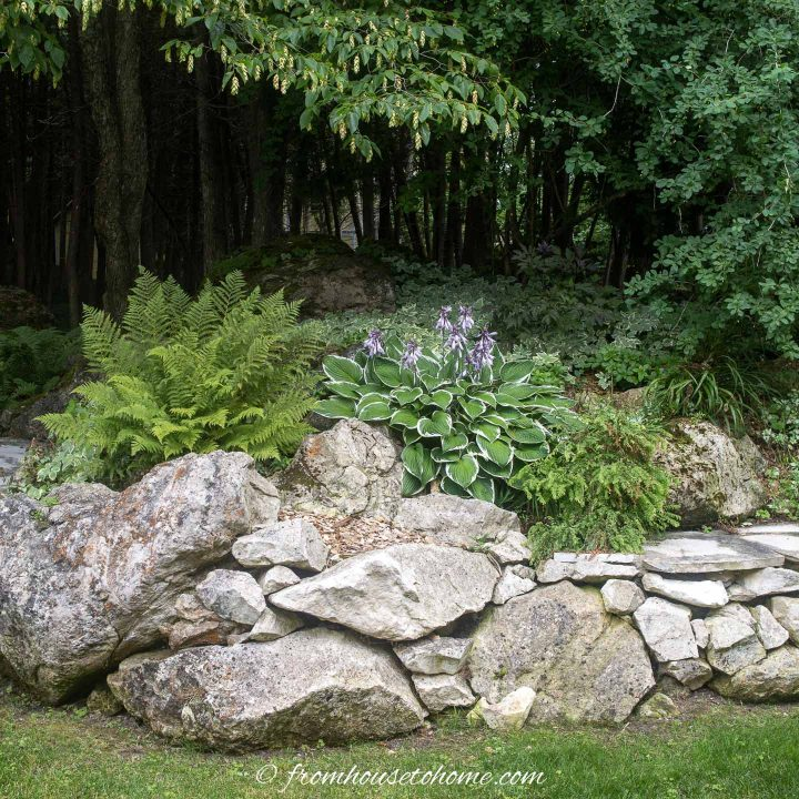 Hostas and ferns planted on top of a stone wall
