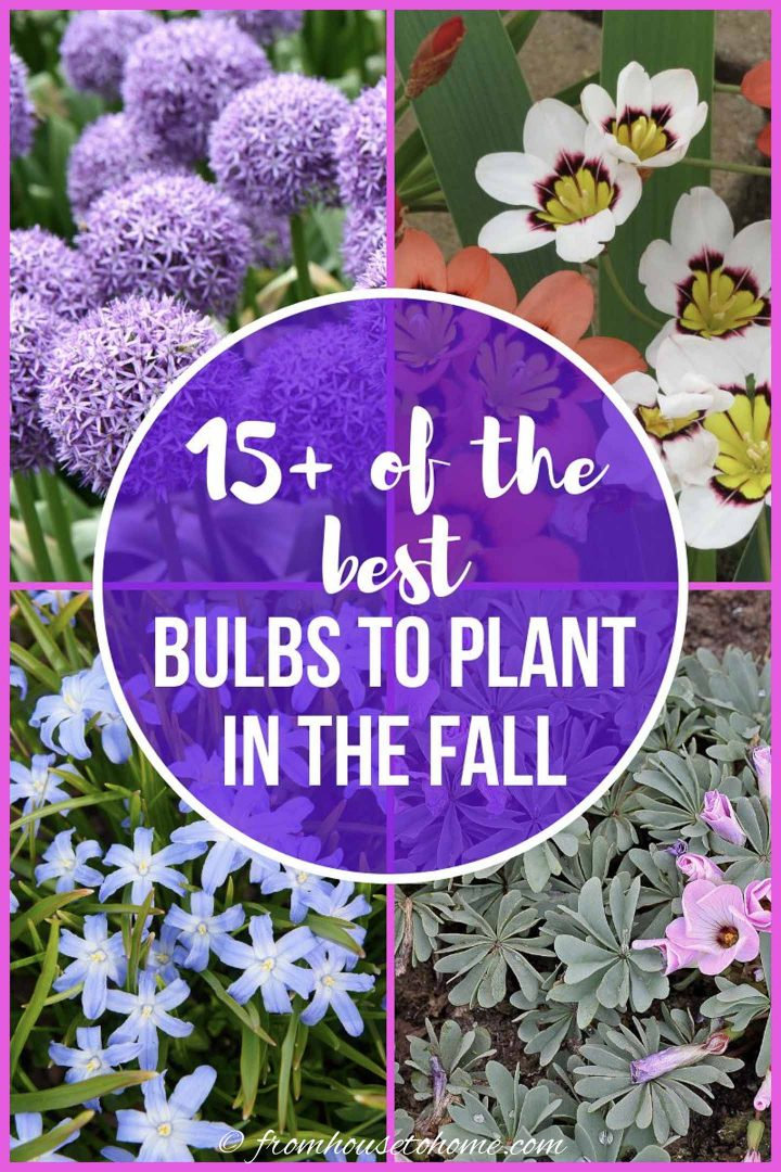Best bulbs to plant in the fall