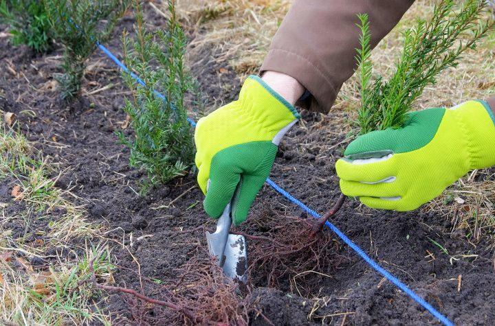 Sebe sendo plantada no outono © LianeM - stock.adobe.com