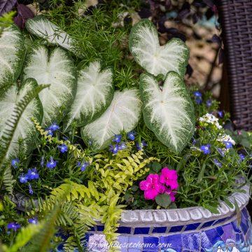 best shade annuals