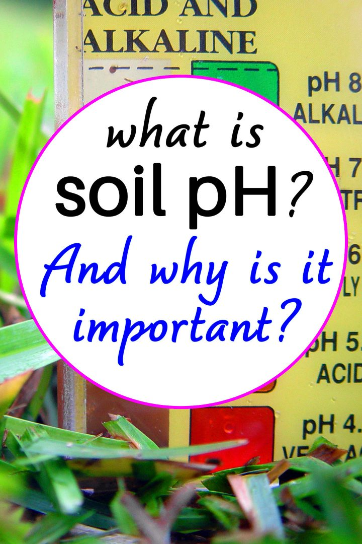What is soil pH? And why is it important?