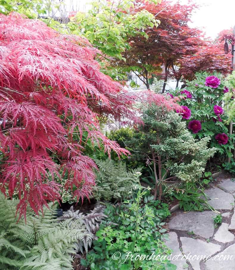 Shade loving shrubs 10 beautiful bushes to plant under trees for Japanese garden plants and trees