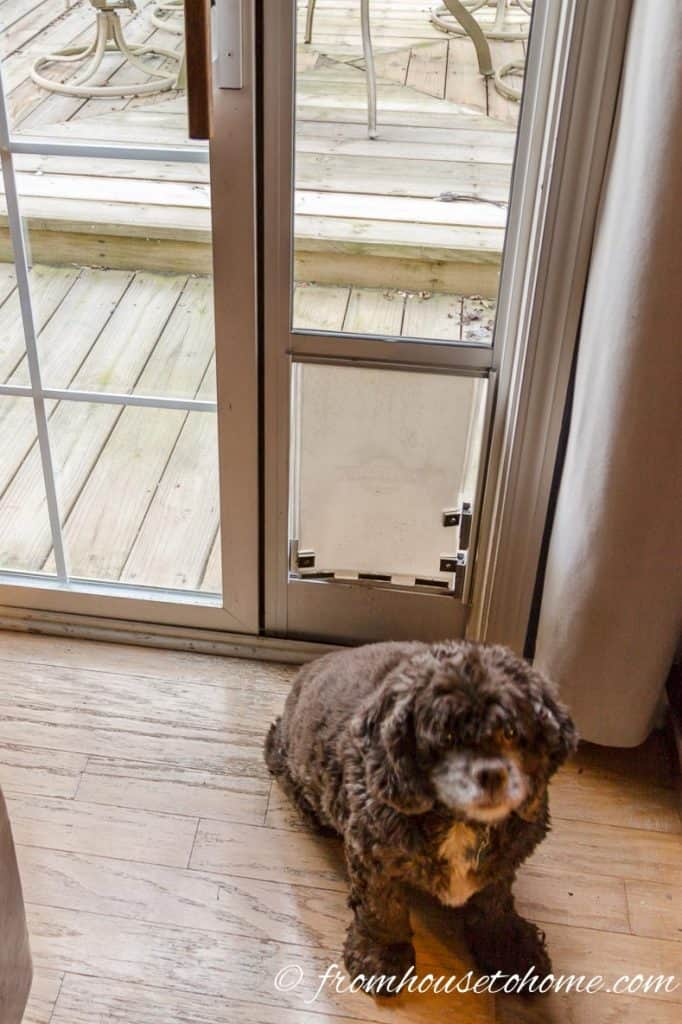 Winston in front of his dog door that he no longer has to share