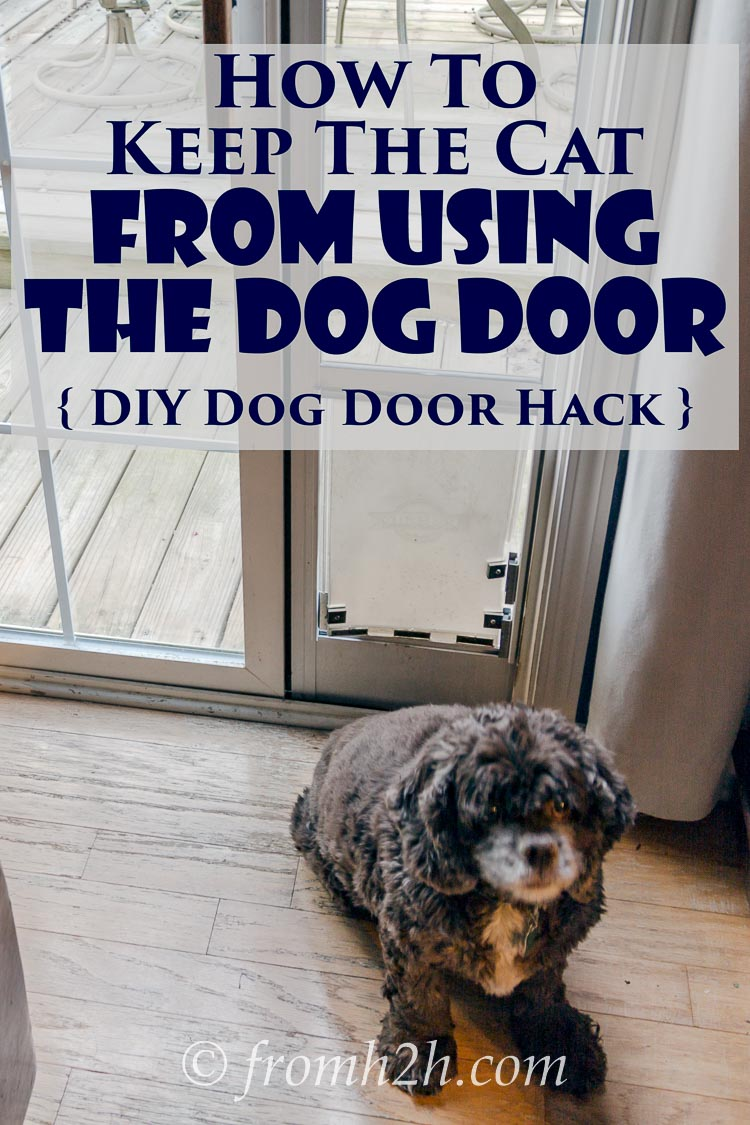 How To Keep The Cat From Using The Dog Door