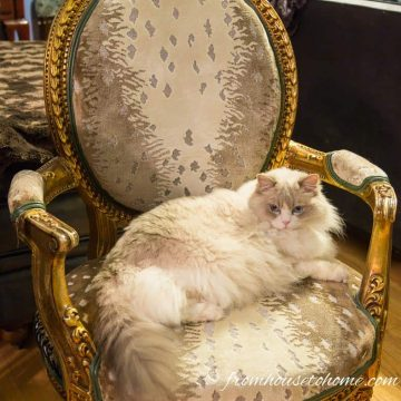 The antique chair