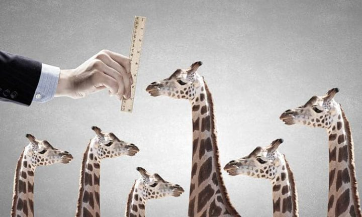 Different sized giraffes demonstrate the interior design principle of varying heights ©Sergey Nivens- stock.adobe.com
