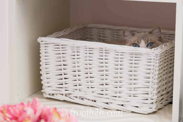 White basket on white shelf with white cat hiding in it