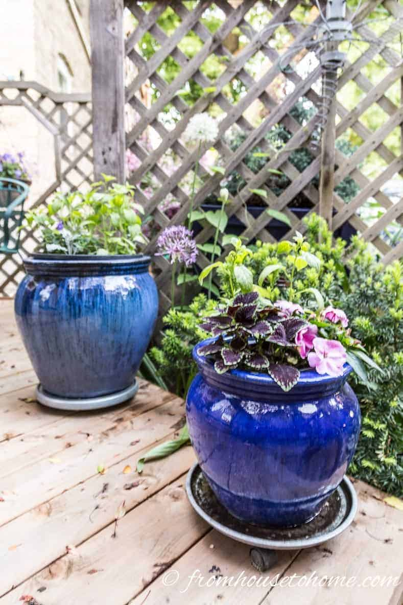 Blue containers in the shade | If you are looking for plants that grow in shade, this list of the best shade loving perennial shrubs, flowers and vines will help you find the plants you want.