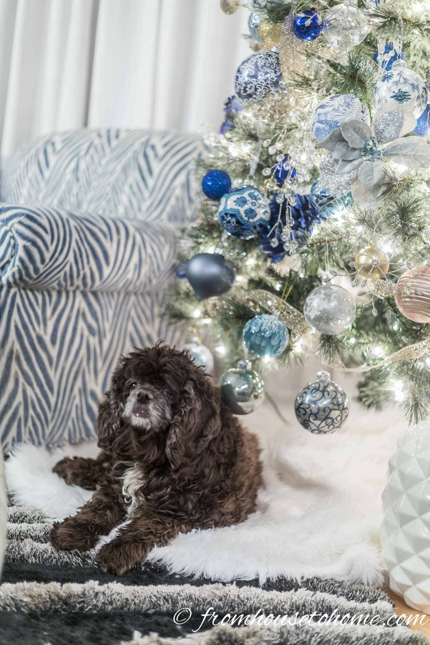A dog lying on a faux fur tree skirt under the blue and white Christmas tree