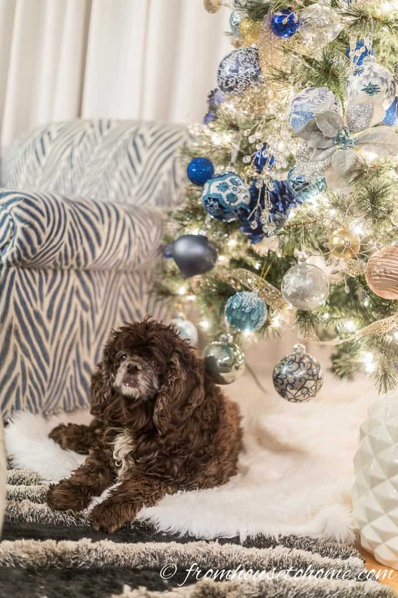 Winston on the faux fur tree skirt | Blue and White Christmas Home Decorating Ideas
