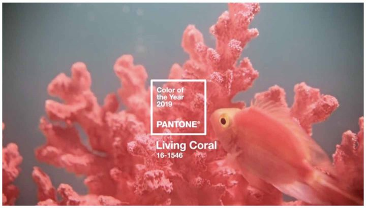 Pantone 2019 color of the year: Living Coral