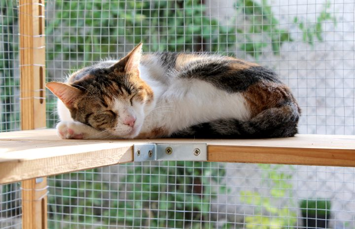 Cat sleeping on a shelf in a catio ©kayeela - stock.adobe.com