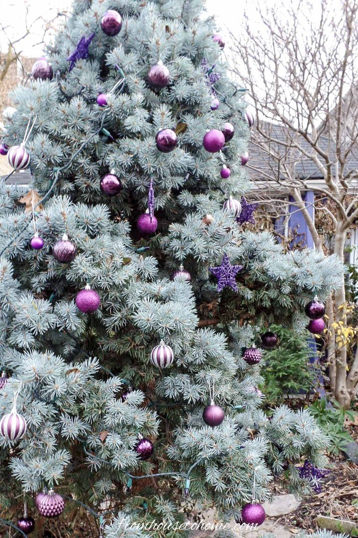 Outdoor Christmas tree with purple ornaments