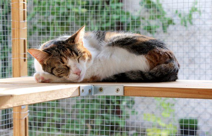 Cat sleeping on a shelf in a catio ©kayeela - stock.adobe.com